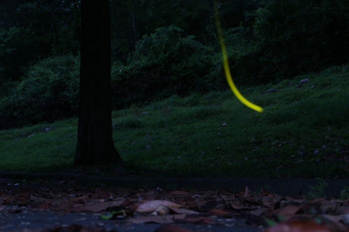 fireflyflicker