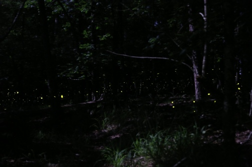firefly magic